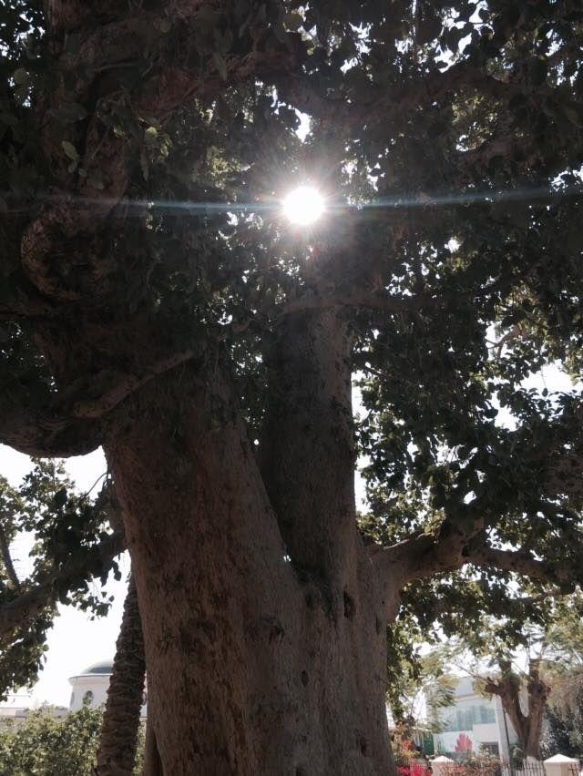"""Natura tutaj budzi się do życia i kipi energią. Tu można """"naładować akumulatory"""" :) Nazaret."""