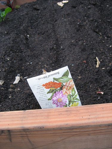 Planting your box garden