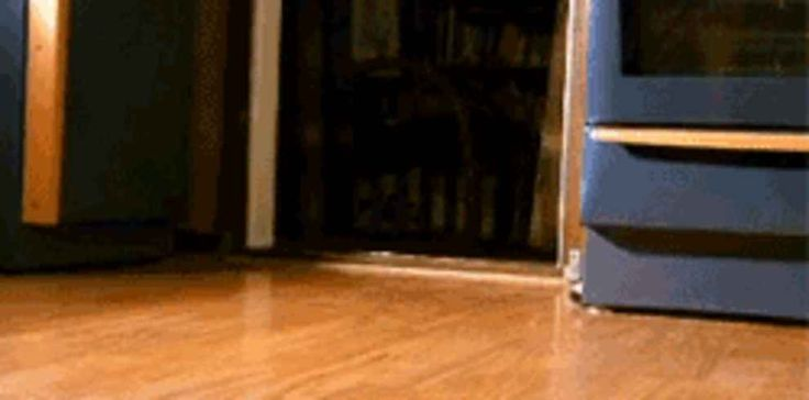 17 Most Vicious Puppy Attacks Ever
