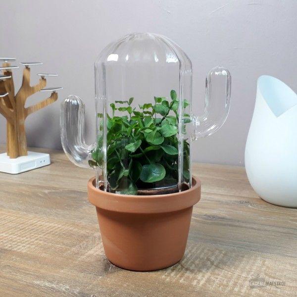 Terrarium Cactus Pot En Terre Cuite Plantes Grasses Cloche En