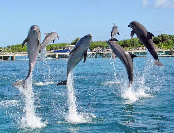 iNotos – Ενημέρωση από την Κρήτη (Γιατί τα δελφίνια πηδάνε έξω από το νερό  __ dolpinakia