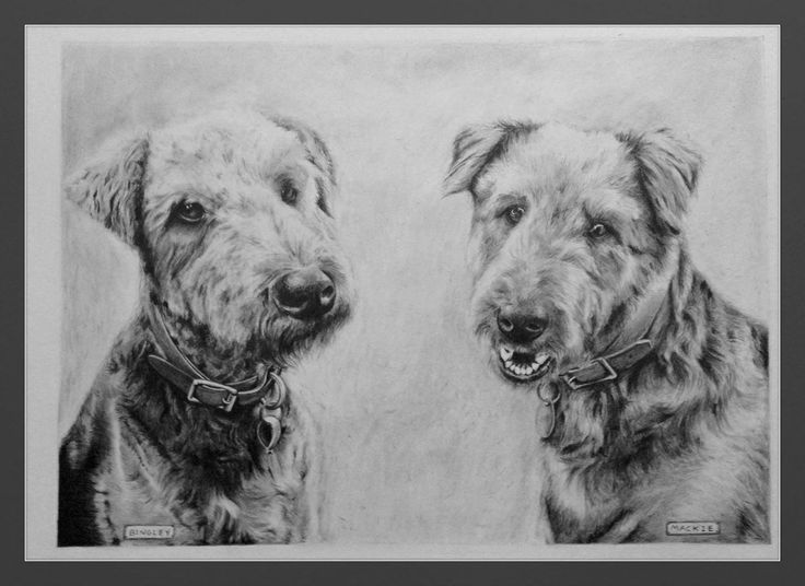 These two dogs were for a friend who has a love for Airedales.