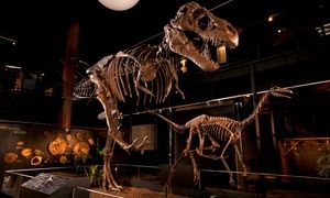 Groupon - General Admission for 2, 4, or 6 at Houston Museum of Natural Science at Sugar Land (Up to 38% Off)   in Houston Museum of Natural Science at Sugar Land. Groupon deal price: $15