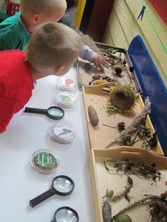 A hands-on exploration of seeds. Good trays I like how this is set up with the white paper and the magnifying glasses and the items above for the children to bring down into a space to observe clear of obstructions.