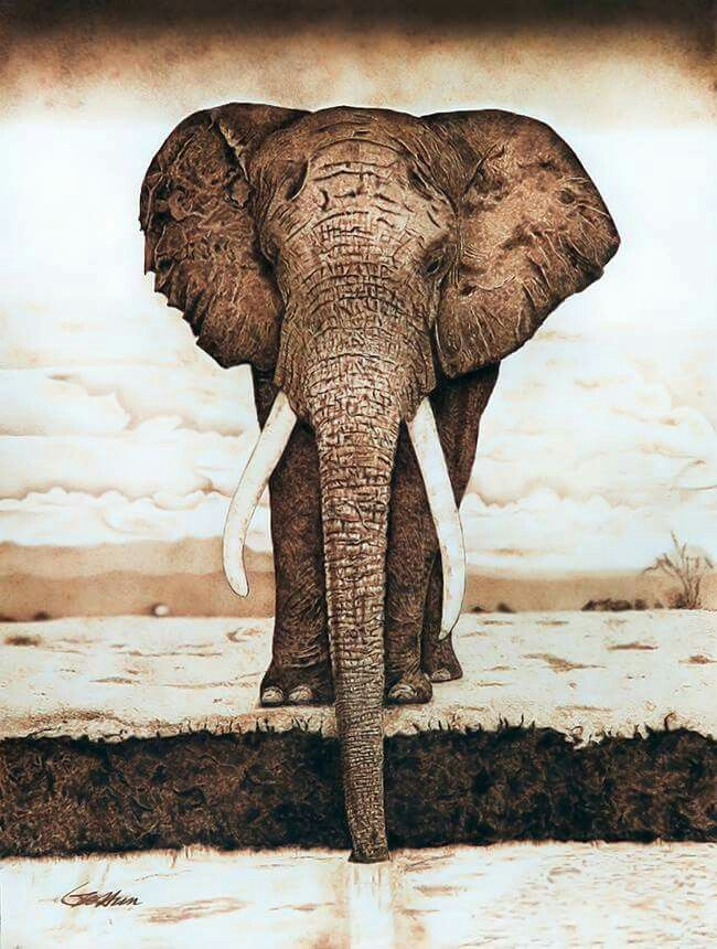 Elephant - Pyrography on paper