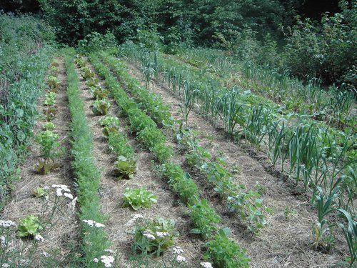 Amazing Planungsbeispiel f r einen Hausgarten Permakultur Design A Harbach m Seeh he Projektziel