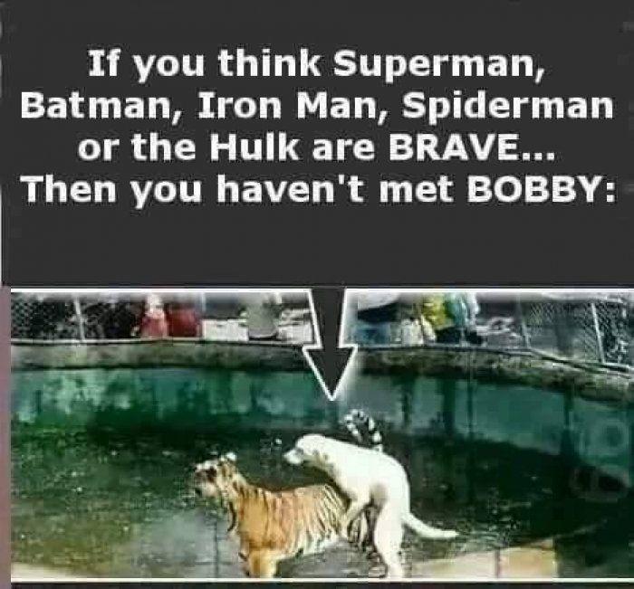 Superheros brave you havent met boddy - animals - http://jokideo.com/superheros-brave-you-havent-met-boddy-animals/