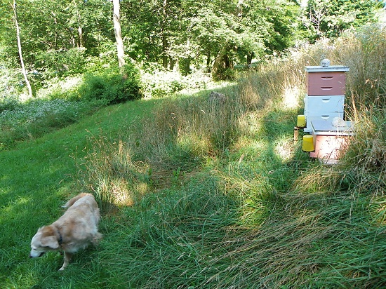 August 1, 2012 Which Brand of White Oil Paint Will Stay White After Five Years? Daisy and Duke Are Happy I Am HOme! | Plein Aire in MaineDaisies Accidental, Hee, Dukes Greeting, Plein Air, Stay White, Interiors Warranty, Oil Painting, Cars Painting, Golden Retriever