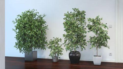5 piante da interno che depurano l'aria