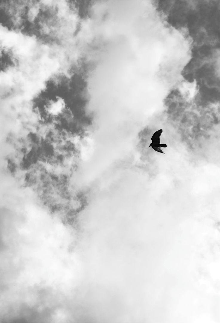 Skybird - null