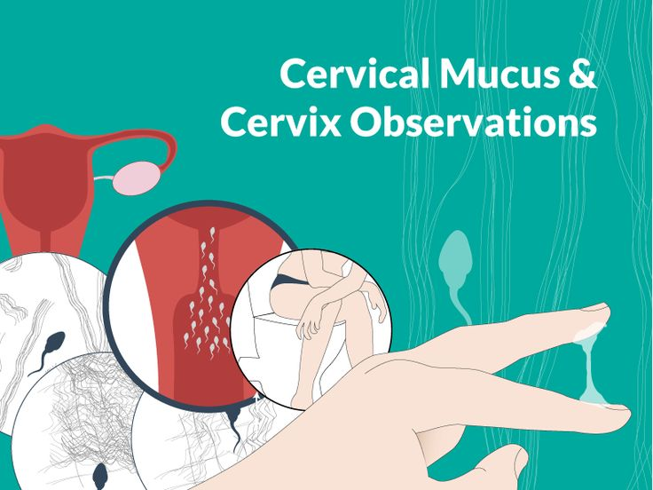 The Ultimate Guide To Cervical Mucus - Know What The Fluid Means + Get Pregnant #Cervix #Cervical #Mucus   https://www.ovulationcalculator.com/cervix-cervical-mucus/
