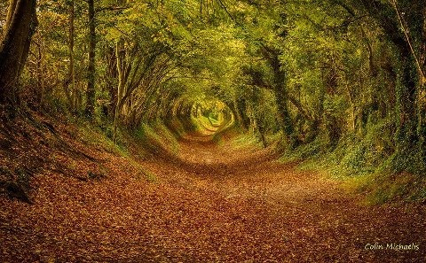 Tunnel of trees near the town of Halnaker in West Sussex.   Photo By: Colin Michaelis
