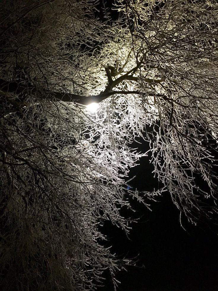 Majestic backlit hoar frosted tree, at midnight. Ghostly, yet fragile and mysterious. www.thebestrate.ca
