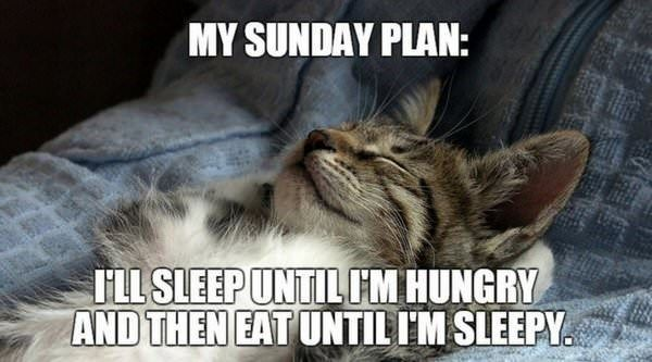 Don't Bother These Cats Who Are Enjoying Their Sunday (Memes)