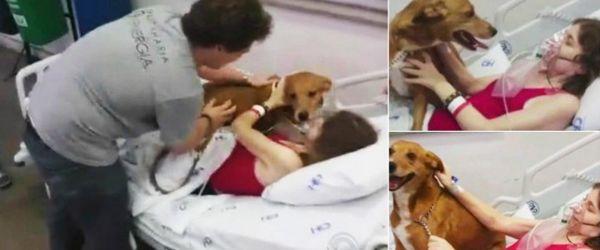 Os animais não podem entrar em hospitais, mas no sul do Brasil abriram uma exceção e esse momento emocionante está a correr o Mundo. O hospital permitiu que um cão entrasse nos cuidados intensivos para …