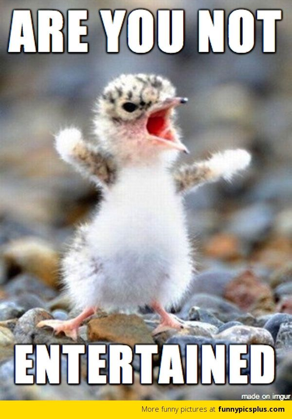 angry birds  Just For Fun  Pinterest  Cheer, Haha and Gladiators