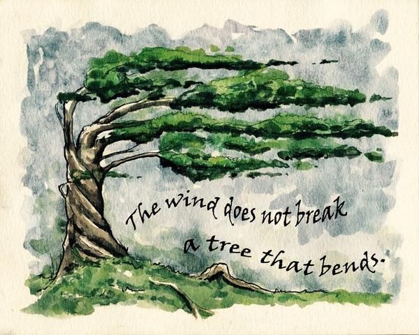 1000+ Images About Bent Not Broken Trees On Pinterest