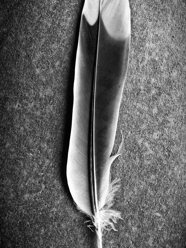 Feather Study - A Detailed Macro Photograph (P9167533)
