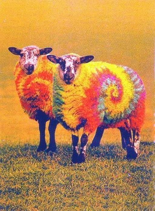 #HOTELS #SWD #GREEN2STAY Black Sheep Inn, Ecolodge, Ecuador ~ HAIKU ~ EVEN the BLACK SHEEP  believes in ODD, how 'bout EWE? one SHEEP two SHEEP three...