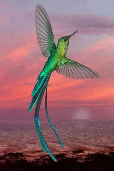~beautiful hummingbird