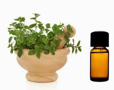 της Αγγελικής Μήλιου, βιολόγος Η Ελληνική ρίγανη (Greek Oregano) είναι φυτό πολυετές και ποώδες η ποιότητα της θεωρείται η καλύ...