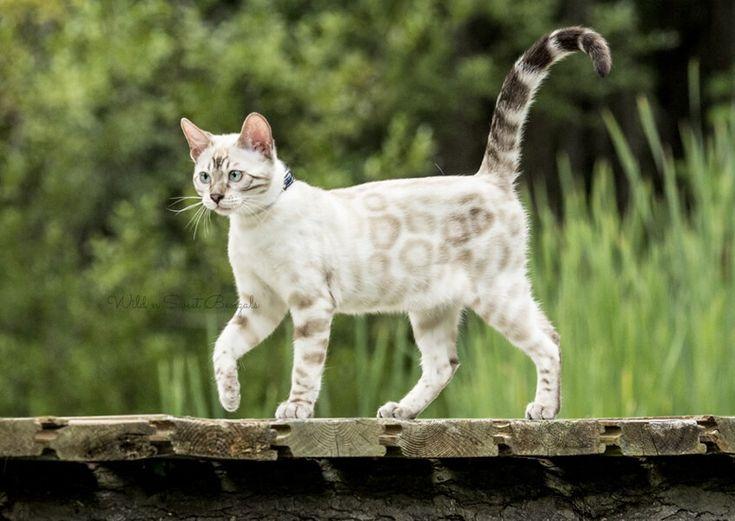 Pin on Cat Photos