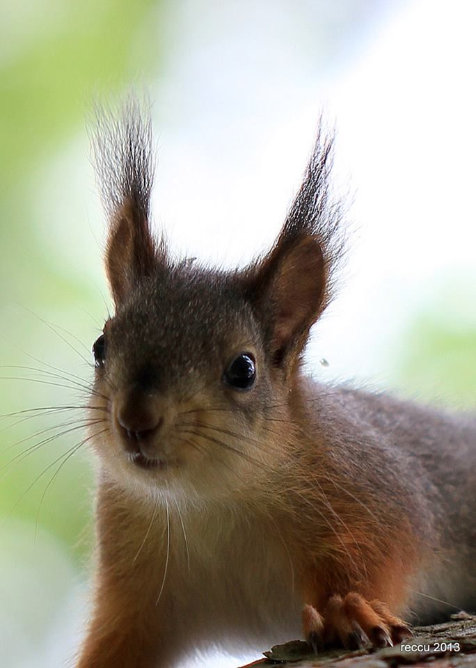 little squirrel with a cute little nose