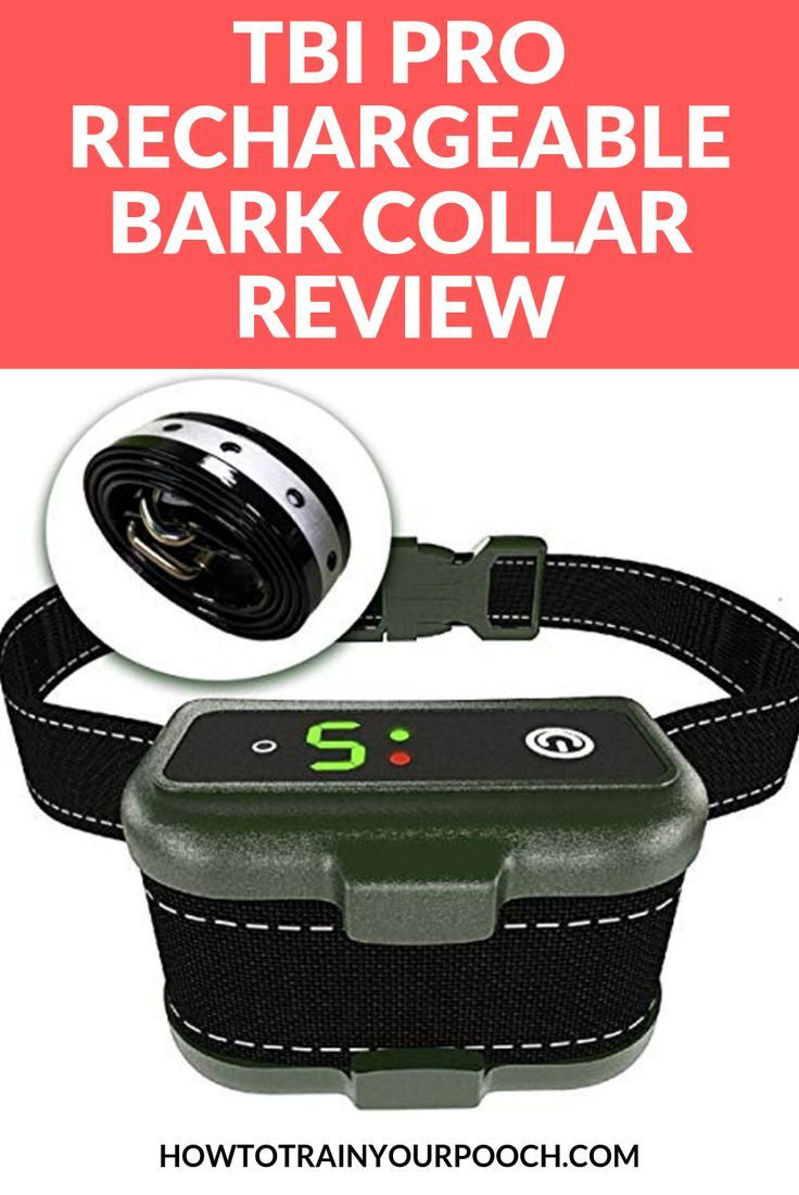 If Your Dog Is Taking Barking To The Next Level Then Maybe It S