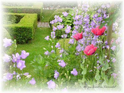 Rozen - Kant en Lavendel: Mijn tuin