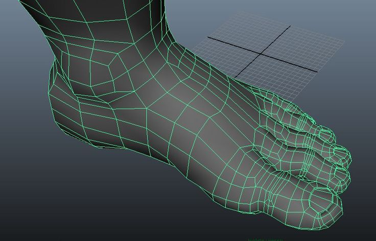 Topology of foot