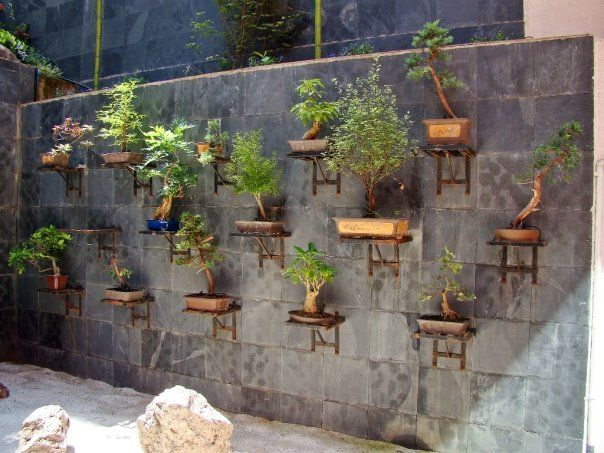 Vertical Bonsai Garden  Bonsai garden ideas  Pinterest