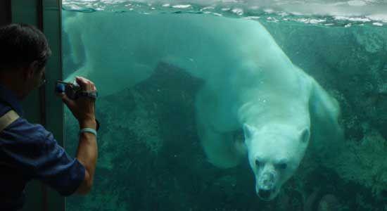 Asahiyama Zoo, Hokkaido, Japan http://www.cheapojapan.com/asahiyama-zoo/