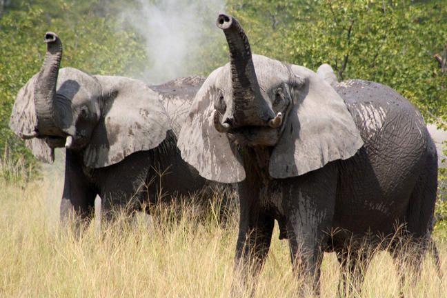 Half Day Chobe Day Trip #elephant #Chobe #Botswana