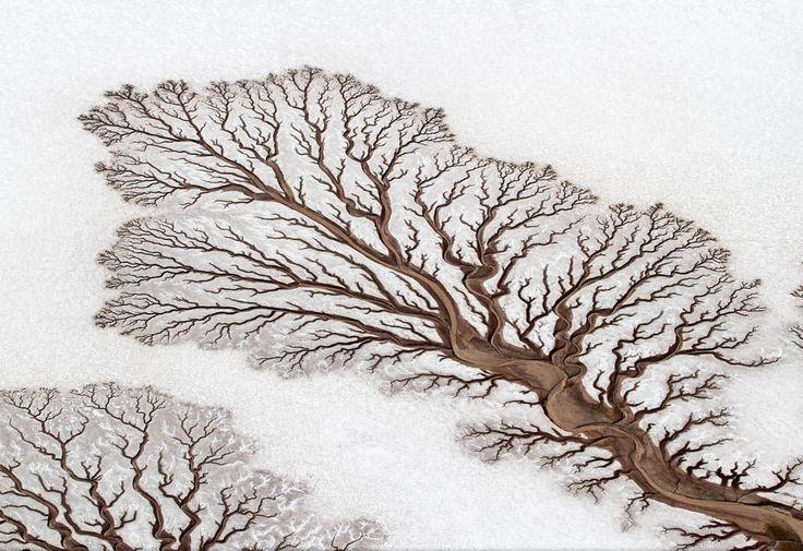 Древовидная река на полуострове Нижняя Калифорния, Мексика. Силуэты деревьев образованы высохшими реками. Пустыня находится ниже уровня моря, и приливы периодически заполняют русла рек. Когда же вода отступает, на песке остаются вот такие узоры. / Фото дня / Моя Планета