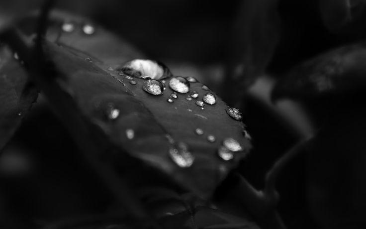 852913-black-and-white-leaf-water-drops.jpg (2560×1600)