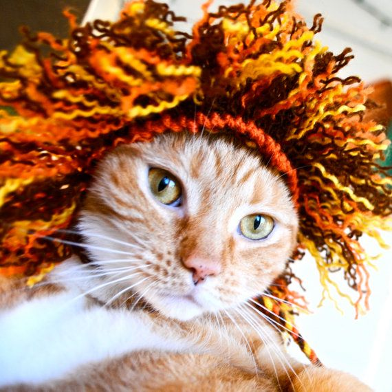 This is too funny!  No cat I've ever lived with would allow such a thing, especially having his picture taken!! Lion Costume for Dogs  Full Mane  Hand Knit Dog Hat  by bitchknits, $30.00