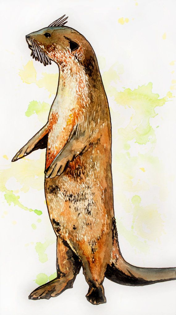 Otter original watercolor painting by corbettsparks on Etsy