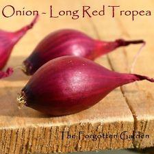 Onion Long Red Tropea Seed 200 Seeds Heirloom Vegetable Garden Italian Bulb