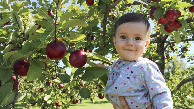 Take the kids on an adventure outside the city and enjoy the best apple picking, snacks and cider, hayrides and other fall activities