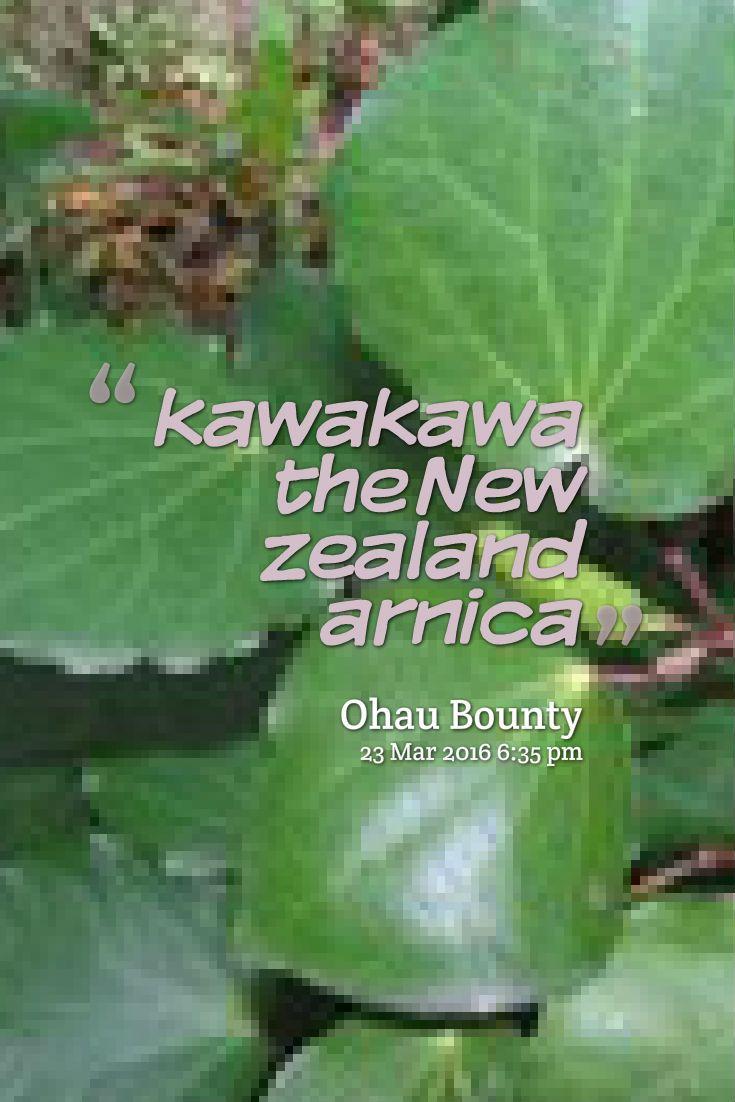 why you should use kawakawa in your every day life. amazing products made from healing kawakawa