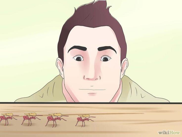 Kill Sugar Ants Step 8 Version 2.jpg