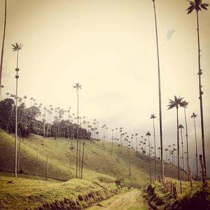 Lugares fuera de este planeta, valle del cócora #colombia #travel #backpacking #palm