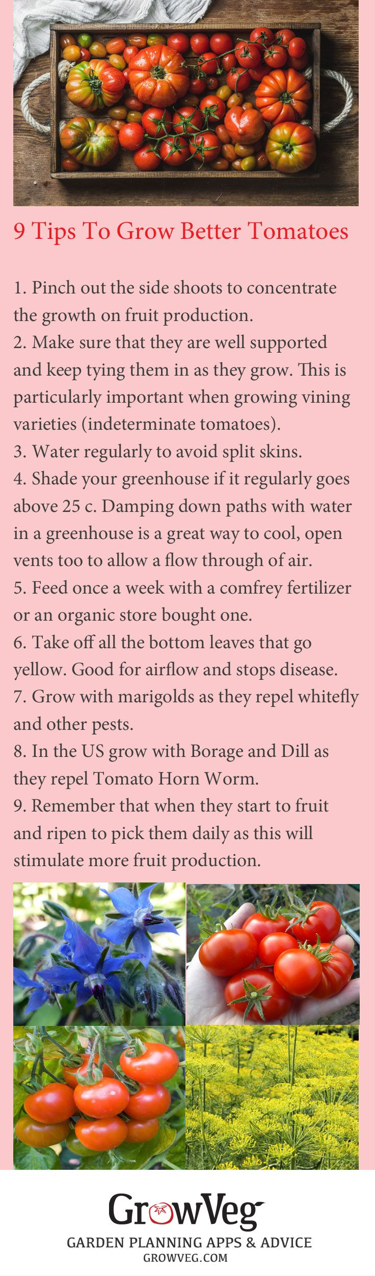 9 Tips To Grow Better Tomatoes from growveg.com