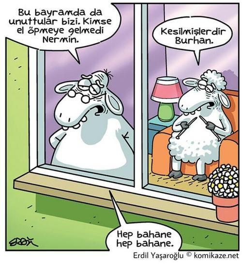 koyun :)/sheep