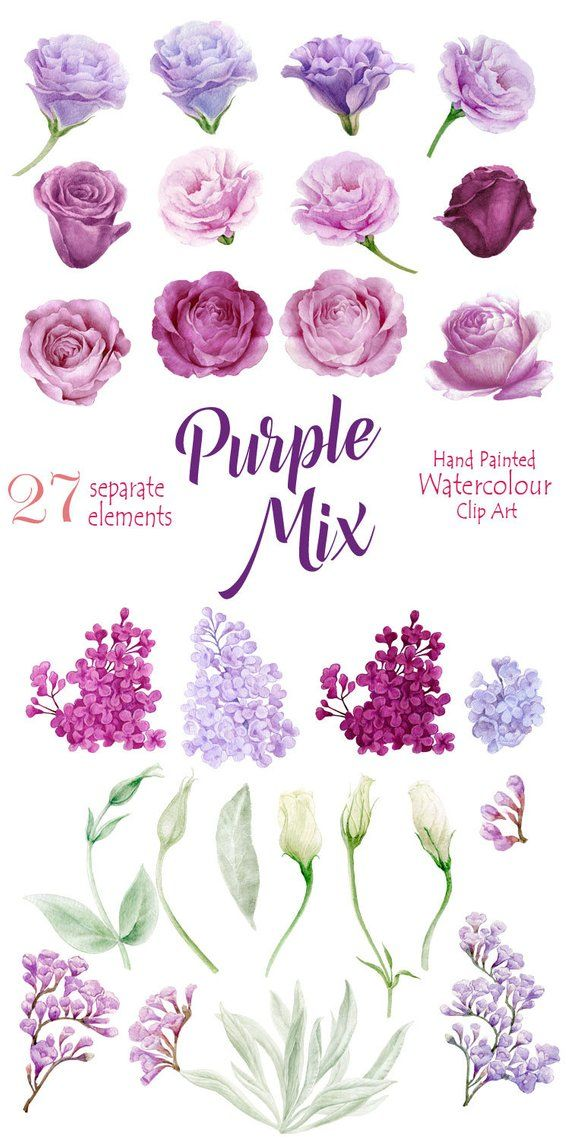 Flower Watercolor Clipart Hand Painted Elements Purpl Roses