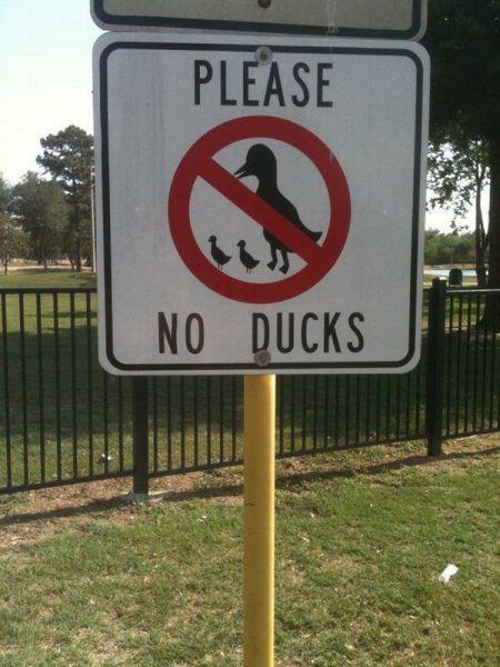 No Ducks Here  この先アヒル禁止