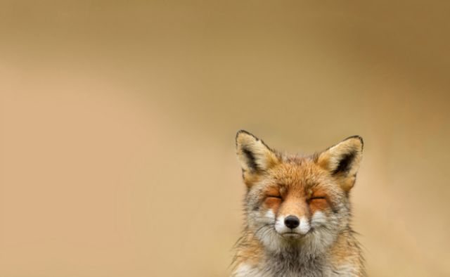 50 Examples of Animal Photography – Fubiz™