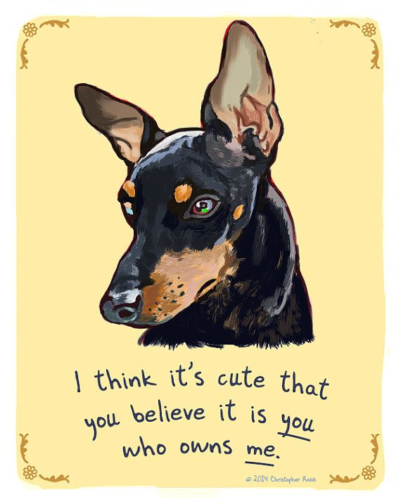 Hey, I found this really awesome Etsy listing at https://www.etsy.com/listing/213279781/mini-pinscher-8x10-print-of-original