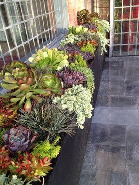 Succulent Landscapes, Gardens & Containers - contemporary - landscape - los angeles - Garden Of Eva Landscape Design Group