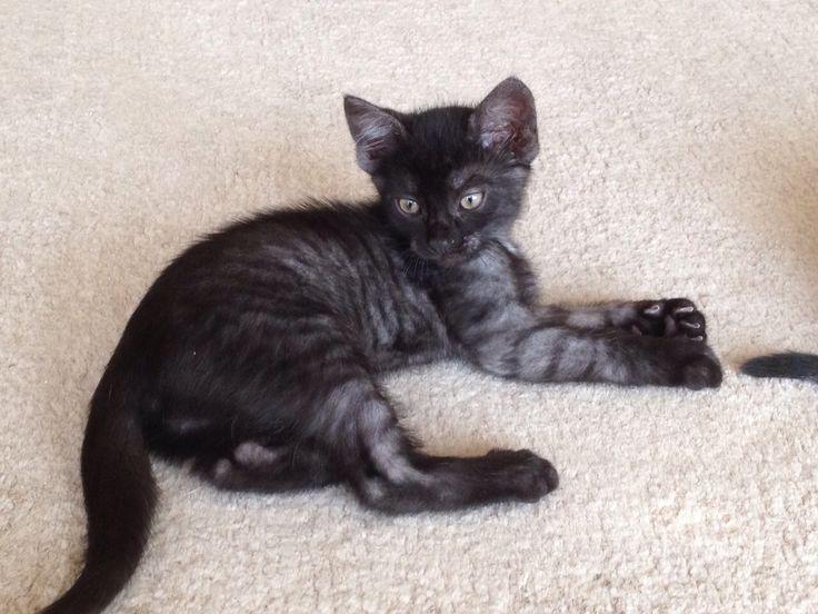 Zeus ca 10 Wochen alt